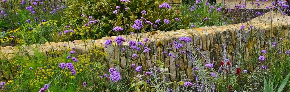 Horatios Wall & plants2