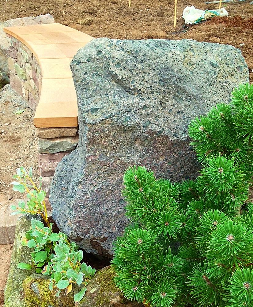 Forfar Pinus mugo